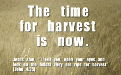 The Time to Harvest in Now