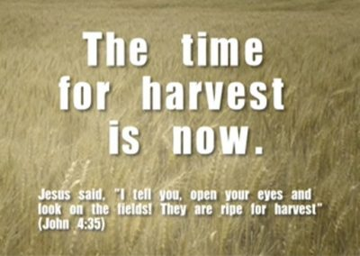 THE TIME TO HARVEST IS NOW