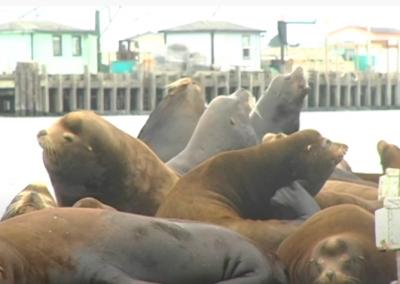 Seals Encourage